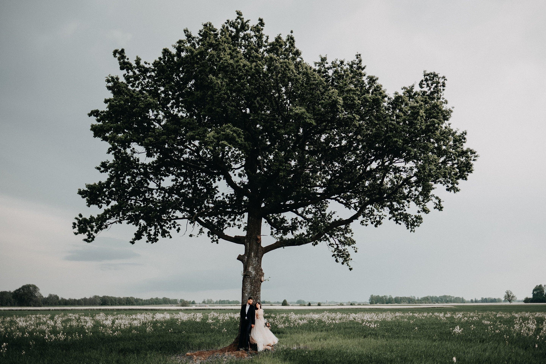 laukas ąžuolas jaunieji vestuvės suknelė rapsai fotografas fotosesija
